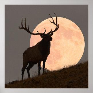 Subida de los alces majestuosos de Bull y de la Lu Póster