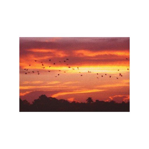 Subida llenada pájaro de Sun Impresión En Lienzo Estirada