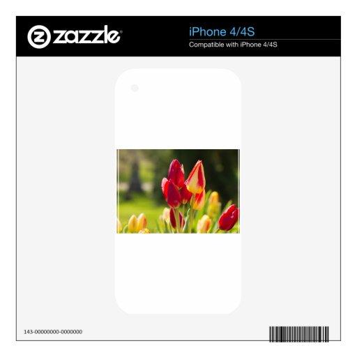 Sublevación del tulipán iPhone 4 calcomanías