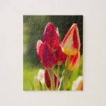 Sublevación del tulipán rompecabeza con fotos