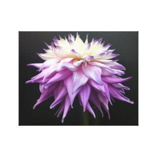 Sublime White and Lavender Purple Dahlia Canvas Print