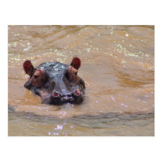 Submerged Hippo Postcard