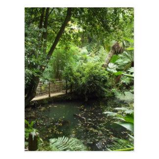 Subtropical Garden Postcard