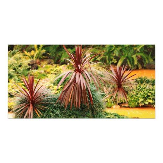 Subtropical vegetation card