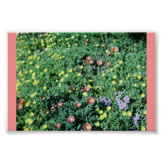 Succulant Bed Poster