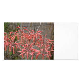 succulent aloe flowers pink neat flower photo photo card template