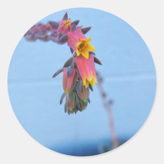 Succulent Bloom Classic Round Sticker