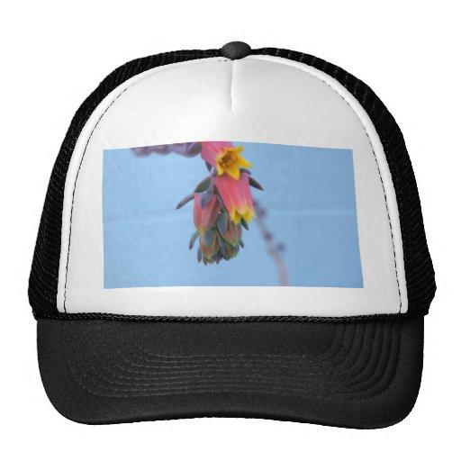 Succulent Bloom Trucker Hat