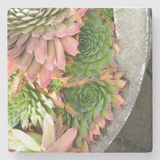 Succulent Bowl Marble Coaster