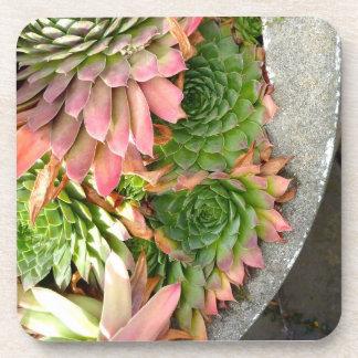 Succulent Bowl Plastic Coasters (set of 6)
