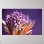 Succulent Buds Print