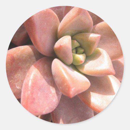 Succulent Cactus Classic Round Sticker