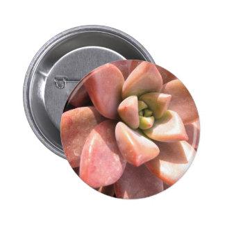 Succulent Cactus Pinback Button