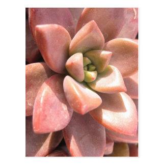 Succulent Cactus Post Card