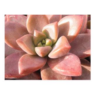 Succulent Cactus Postcard