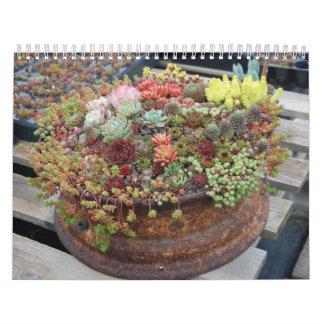 Succulent Calendar 2011