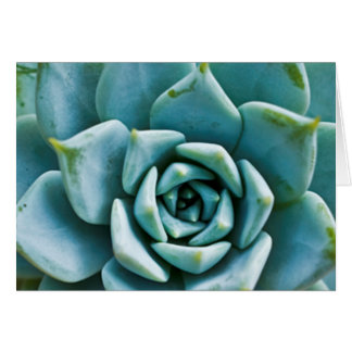 Succulent Stationery Note Card
