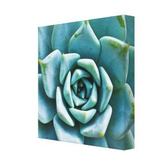 Succulent Closeup Canvas Print