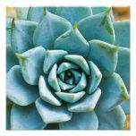 Succulent Closeup Photograph
