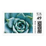 Succulent Closeup Postage Stamp