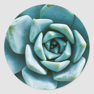 Succulent Closeup Round Stickers