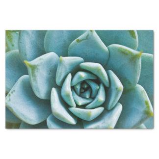 Succulent Closeup Tissue Paper