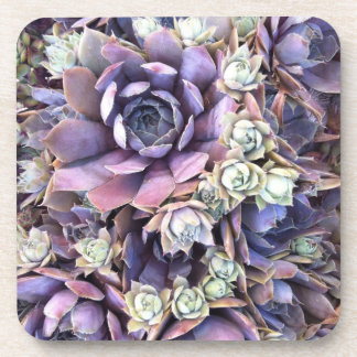Succulent Coasters