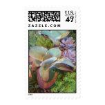 Succulent Container Garden stamp