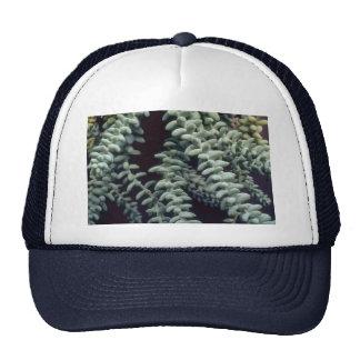 Succulent de la planta gorras