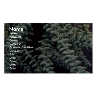 Succulent de la planta plantilla de tarjeta de negocio