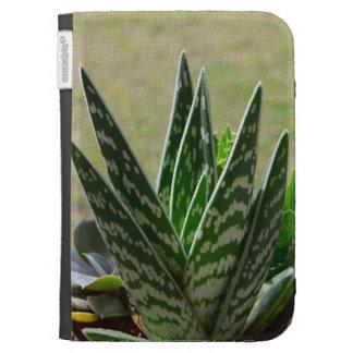 "Succulent de Variegata del ""cocodrilo"" del áloe"