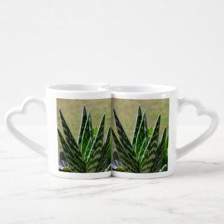"""Succulent de Variegata del """"cocodrilo"""" del áloe Tazas Amorosas"""