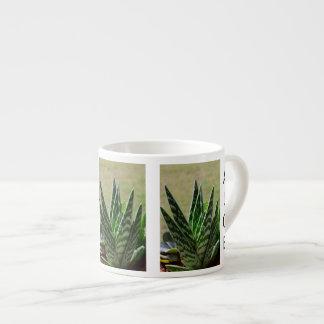 """Succulent de Variegata del """"cocodrilo"""" del áloe Tazitas Espresso"""