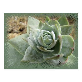 Succulent del jade tarjeta postal