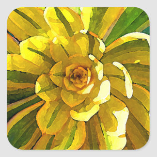 Succulent del resplandor solar del Amy Vangsgard Pegatina Cuadrada
