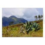 Succulent Ecuador Greeting Card