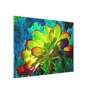 Succulent en Senecio azul Impresiones En Lienzo Estiradas