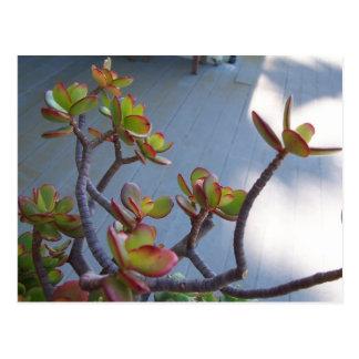 Succulent en una cubierta de Oxnard… el diseño de Tarjeta Postal