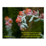 Succulent floreciente postal