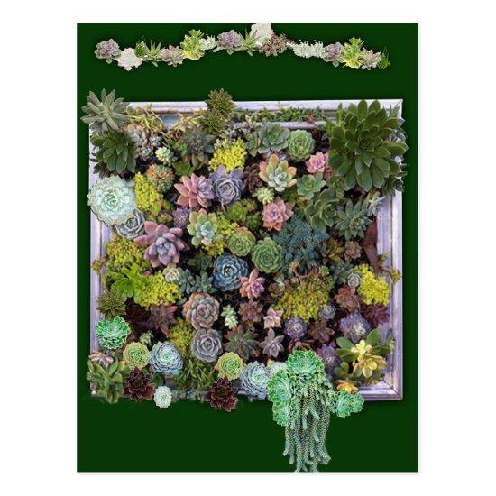 Succulent garden design postcard