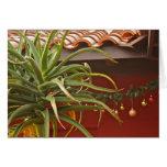 Succulent garden greeting card: Happy Aloedays!
