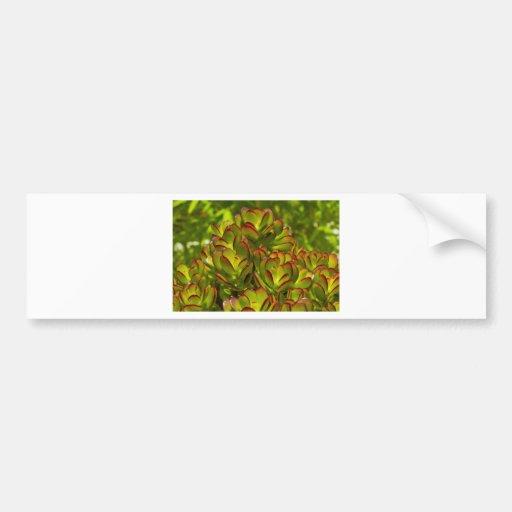 Succulent Glow Bumper Sticker