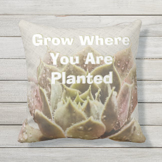 Succulent Grow Where You Are Planted Pillow