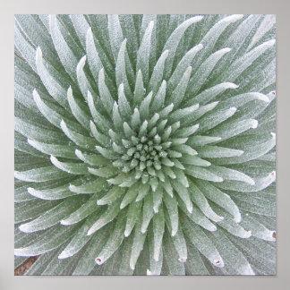 Succulent hawaiano del cactus impresiones
