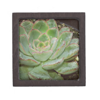 Succulent, Hen and Chicks Jewelry Box
