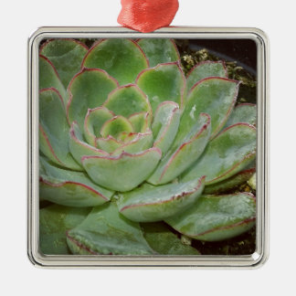 Succulent, Hen and Chicks Metal Ornament