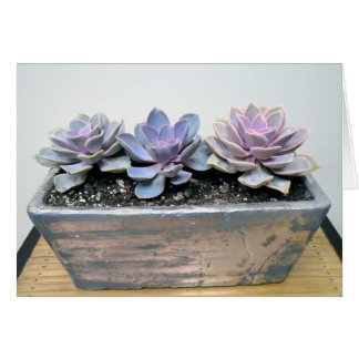 Succulent in Silver Container by The Perfect Plant Greeting Card