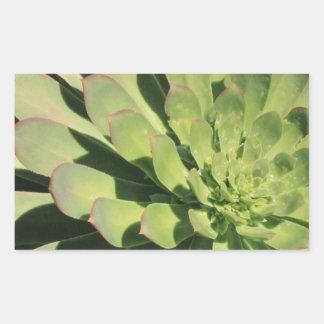 Succulent Love 2 Rectangular Stickers