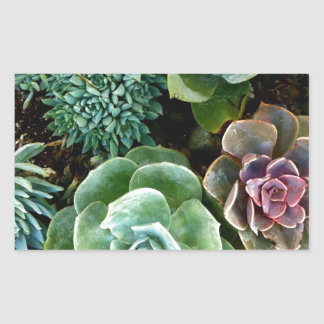Succulent Love Rectangle Stickers