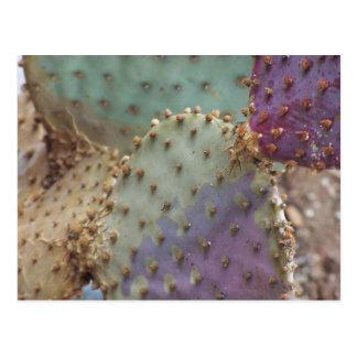 Succulent magnífico… Ojai una vez más… Postal